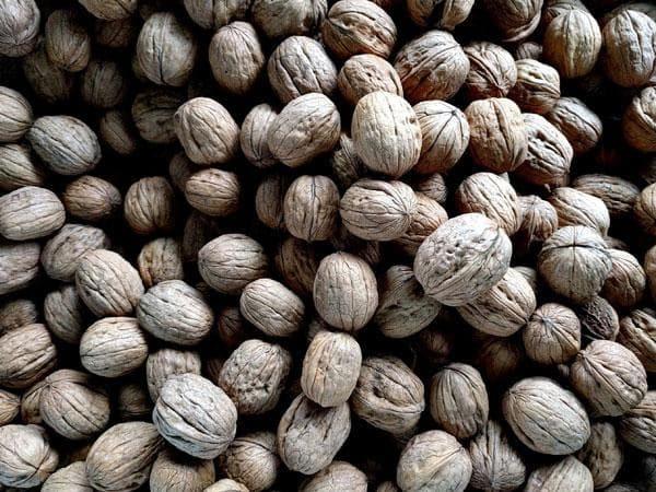 walnuts-4f4498b-3dcaa4b297b33877b4afe40ad50e6e43-7003143